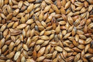 Sample Image - Brown Malt